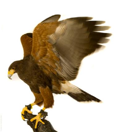 Contact-Hawk
