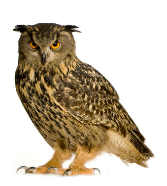 Event-Owl