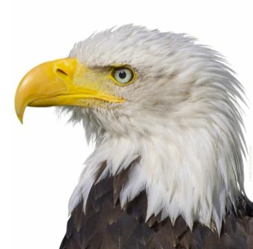 Wrangler-Eagle